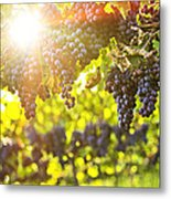 Purple Grapes In Sunshine Metal Print