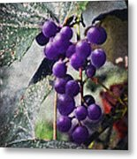 Purple Grapes - Oil Effect Metal Print