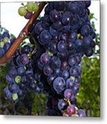Purple Grapes Metal Print