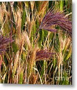 Purple Grasses Metal Print