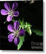 Purple Highlights Metal Print