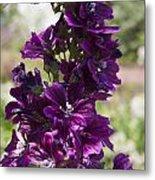 Purple Hollyhock Flowers Metal Print