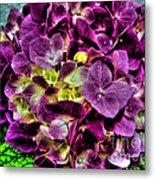 Purple Hortensia After Summer Rain Metal Print