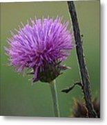 Purple In Nature Metal Print