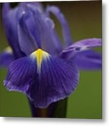 Purple Iris 6 Metal Print