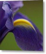 Purple Iris 9 Metal Print