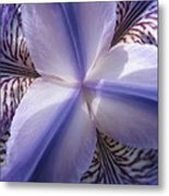 Purple Iris Inside Metal Print