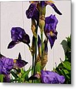 Purple Iris Stalk Metal Print