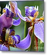 Purple Irises Closeup Metal Print