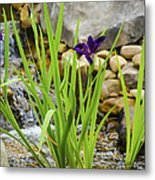 Purple Irises Growing In Waterfall Metal Print