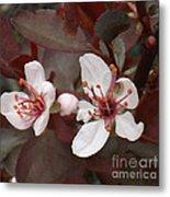 Purple Leaf Sand Cherry Burst Metal Print