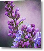 Purple Lilacs Metal Print