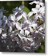 Purple Lilacs II Metal Print