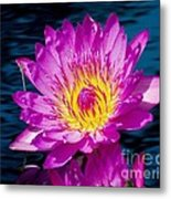 Purple Lily On The Water Metal Print