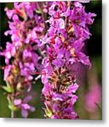 Purple Loosestrife Tall Metal Print