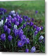 Purple Melody Metal Print