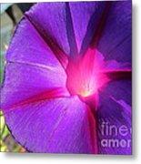 Purple Morning Glory - Flower Metal Print