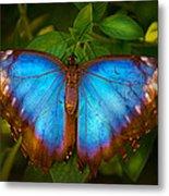 Purple Morpho Butterfly Metal Print