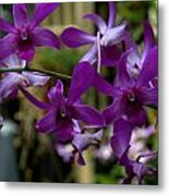 Purple On The Vine Metal Print