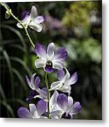 Purple Orchid Flower Inside The National Orchid Garden In Singapore Metal Print