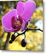 Purple Orchid In September Sun Metal Print