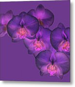 Purple Orchid On Purple Metal Print