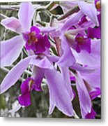 Purple Orchid Personality Metal Print