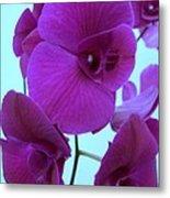 Purple Orchids 3 Metal Print