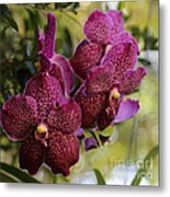 Purple Orchids With Bokeh Metal Print