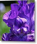 Purple Pandora Metal Print