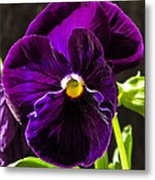 Purple Pansy Metal Print