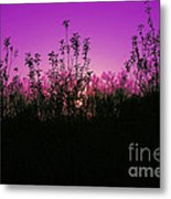 Purple Paradise Sunset By Diana Sainz Metal Print