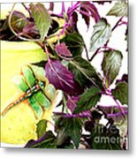 Purple Passion And Dragonfly Pot Metal Print