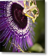 Purple Passion Flower Metal Print