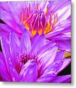 Purple Perfection Metal Print
