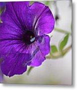 Purple Petunia 2013 Metal Print