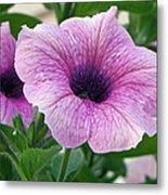 Purple Petunia  Metal Print