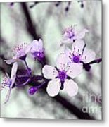 Purple Pink Blossoms Metal Print