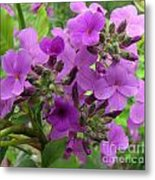 Purple Popping 1 Metal Print