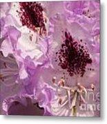 Purple Rhodo Metal Print