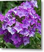 Purple Royale Metal Print by Kimberly Ayars