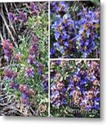 Purple Sage Collage Metal Print