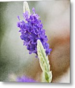 Purple Sage Texture Metal Print