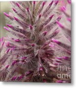 Purple Spike Metal Print