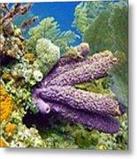 Purple Sponge Metal Print