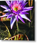Purple Star Water Lily  By Diana Sainz Metal Print