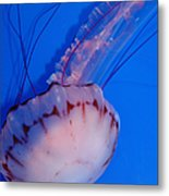 Purple Striped Jelly Fish 5d24930 Metal Print by Wingsdomain Art and Photography