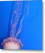 Purple Striped Jelly Fish 5d24934 Metal Print