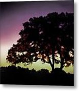 Purple Sunset Green Flash And Oak Tree Silhouette Metal Print