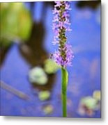 Purple Swamp Flower Metal Print